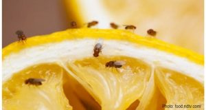Fruit Flies and Gnats